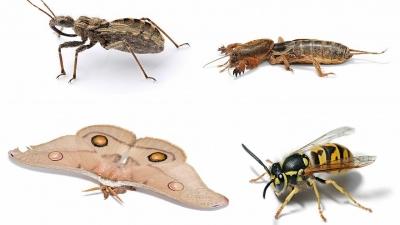 Más de la mitad de las especies de insectos podrían desaparecer — Ecología