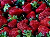 Cómo el 'terrorismo' de las fresas puso en vilo a un país entero