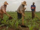 Cuba denuncia en FAO daños del bloqueo de EE.UU. a la agricultura