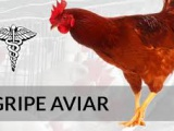 Reportan un brote altamente patógeno de gripe aviar H5N6 en Camboya