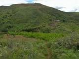 Alcanza niveles de récord el cultivo de coca en Colombia